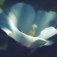 Радужность мира :: Swetlana V