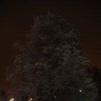 Зима, ночь,мороз. :: Александр