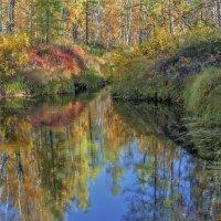 Краски лесотундры. :: Александр Голубов