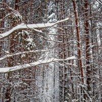 Зимний лес :: Olga Mach