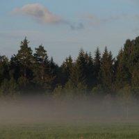 В лёгком тумане... :: Юрий Цыплятников