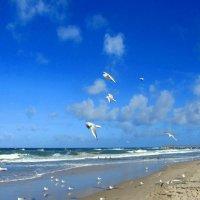 Береговые чайки :: Сергей Карачин