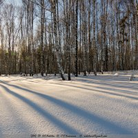 Фактура золотого часа (1) :: Сергей Никитин