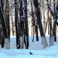 Голубь и разноцветный снег :: Фотогруппа Весна - Вера, Саша, Натан