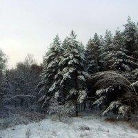 Зимний пейзаж. :: Нина