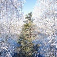 В зимних одеждах :: Андрей Снегерёв