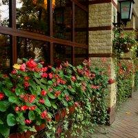 Цветущие подоконники :: Miola