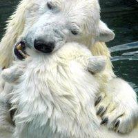 Медвежьи страсти. :: Елена