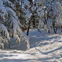 Один день зимы :: Наталья Джикидзе (Берёзина)