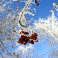 Творчество февраля.. :: Ирина