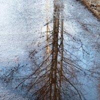 весеннее отражение... :: Марина Харченкова