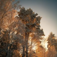 Зимнее утро :: Олег Фиедориенко
