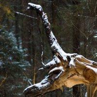 Лесной кто-то. :: Михаил Елфимов