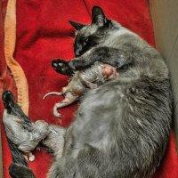 Новые жизни-из серии Кошки очарование мое! :: Shmual Hava Retro