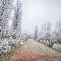 Иней. :: Раскосов Николай