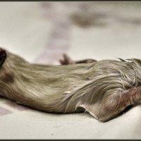 Первая гимнастика-из серии Кошки очарование мое! :: Shmual Hava Retro
