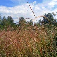 Травы , травы .... :: Агриппина