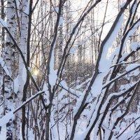 снова зима :: Элла Чуксина