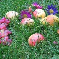 Плоды осенние :: Natali
