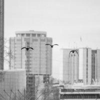 полет над городом :: евгений Смоленцев