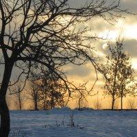 зимний восход :: Елена