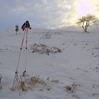 Зимняя сиеста :: Svetlana Kravchenko