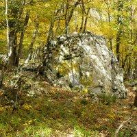 Ялта-Осенний лес :: Александр Костьянов