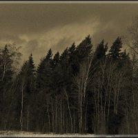 Будет дождь! :: Григорий Кучушев
