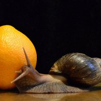Апельсин :: Игорь