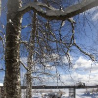 февраль в Бьёркудден :: liudmila drake