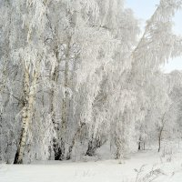 Февраль :: Татьяна Лютаева