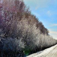 Зима весенняя :: Юрий