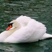 Как будто,белая ладья...! :: Наталья