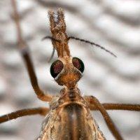 А за ним комарики, на воздушном шарике :: Игорь Лазуренко