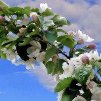 Настроение весны :: Nikolay Monahov