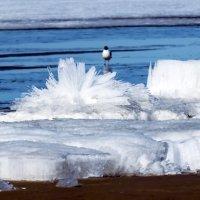 Ледяные Хризантемы 2 :: Юрий Медведев