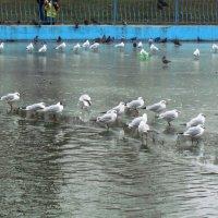 птичьи разборки :: Александр Корчемный