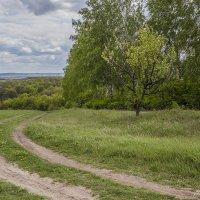 Зелёная весна :: Юрий Клишин