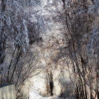 снежная тропа :: лиана алексеева