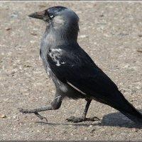 походка :: linnud