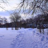 Утро зимнего парка :: Татьяна Ломтева