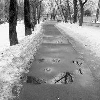 Лужи в феврале :: Yulia Sherstyuk
