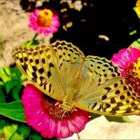 Яркие летние краски :: Нина Корешкова