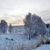 мороз :: Natalia Mihailova