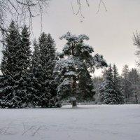 В старом парке. :: ТАТЬЯНА (tatik)