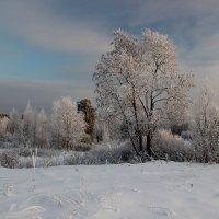 Серебряный шёпот леса. :: mike95