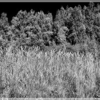 Деревья и травы... :: марк
