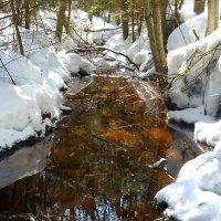 Вопреки зиме :: Павлова Татьяна Павлова
