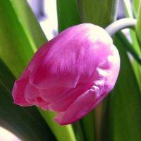 Скоро весна :: Елена