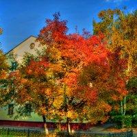 Золотая осень :: Антон Щербаков